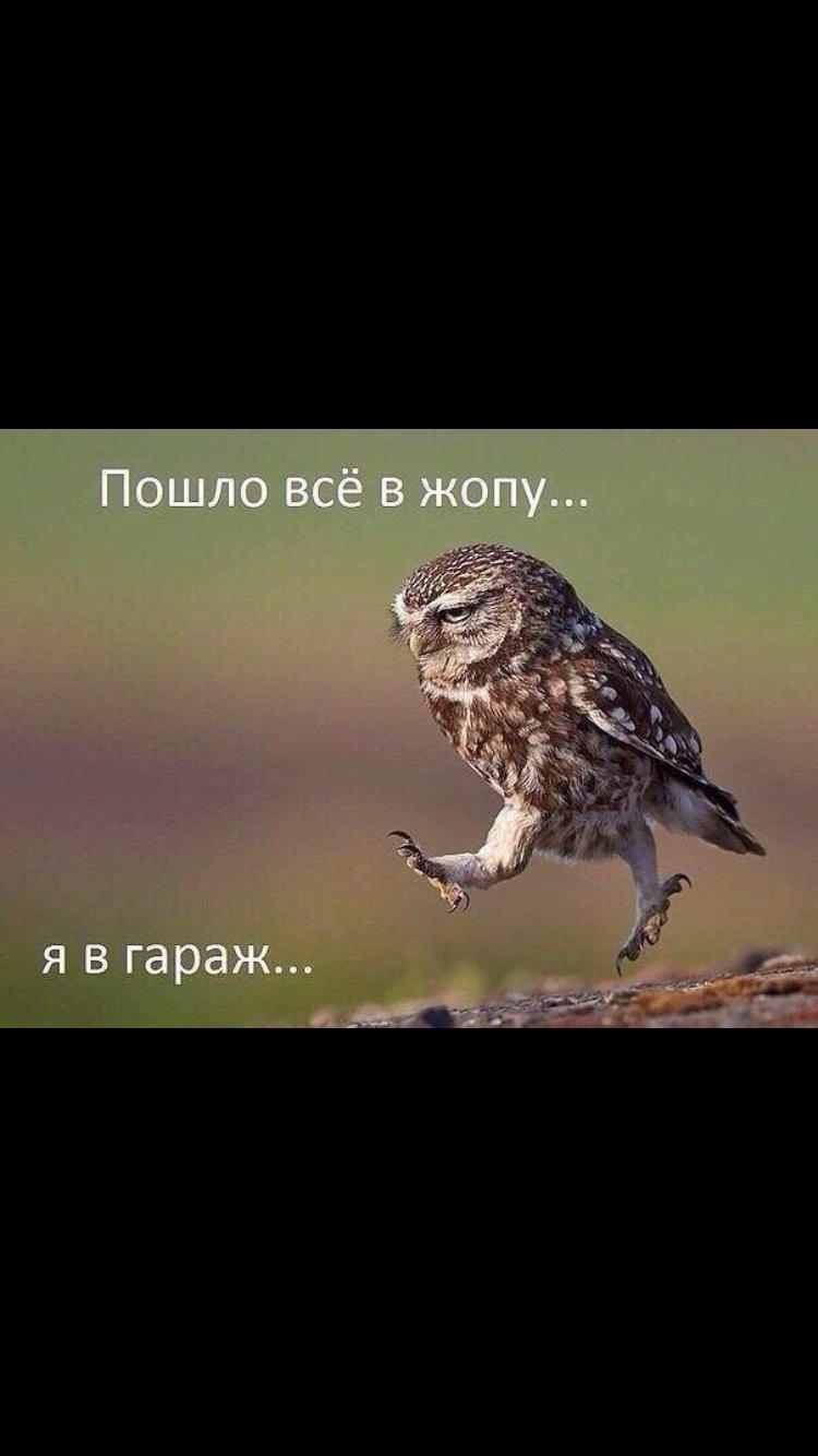 мелким ой все картинки приколы сова здоров, любим