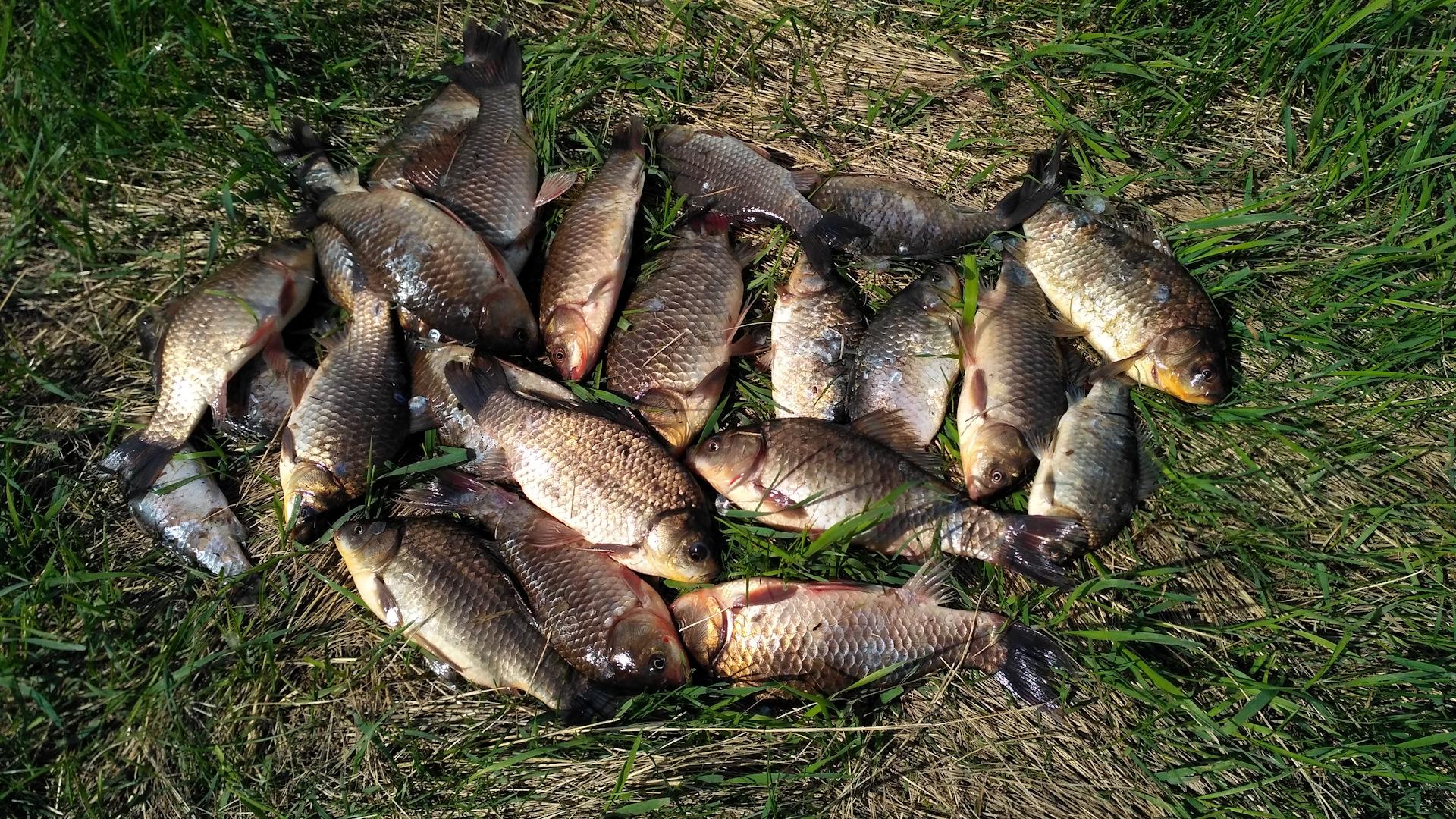 Платная рыбалка в Тюменской области