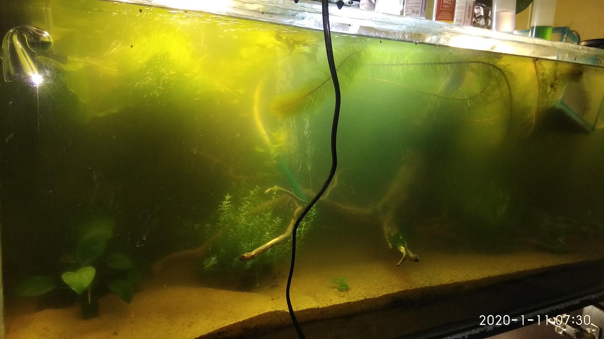 самых бактериальная вспышка в аквариуме фото вебкамерой